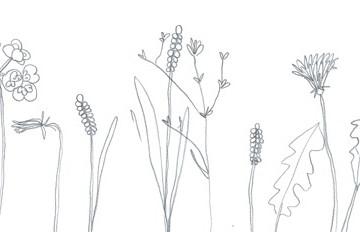 fiori calendario